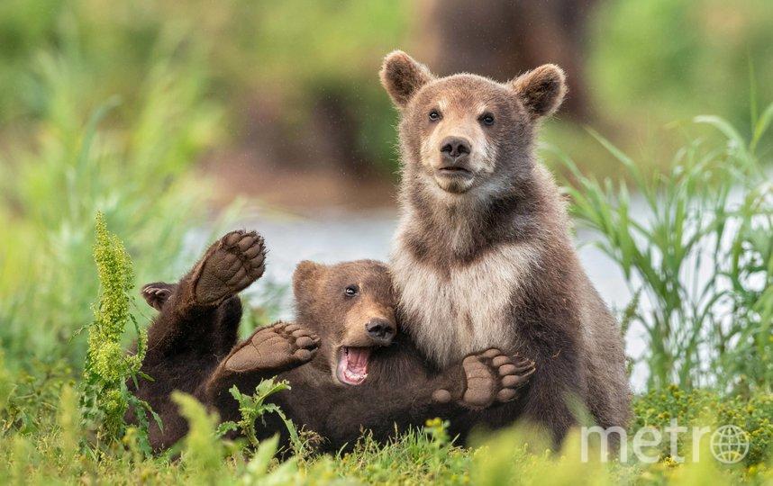 Работа финалиста конкурса. Фото Yarin Klein / Comedy Wildlife Photo Awards 2020.