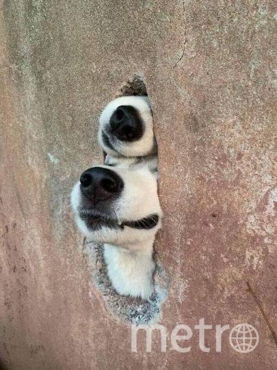 Любопытство не довело двух друзей до добра. Фото Facebook, Sachitha Amarasekera