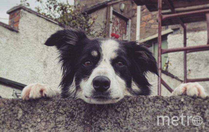 Ждать хозяина из магазина бывает утомительно, поэтому можно улыбнуться прохожим. Фото Facebook, Blair Mowat