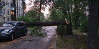 Шторм в Петербурге: пострадали двое, повалены десятки деревьев