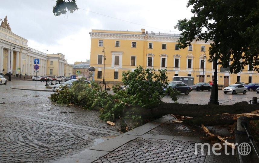 Сильный порыв ветра свалил почти вековой клен в Михайловском сквере прямо напротив Русского музея. Фото https://vk.com/kb_spb