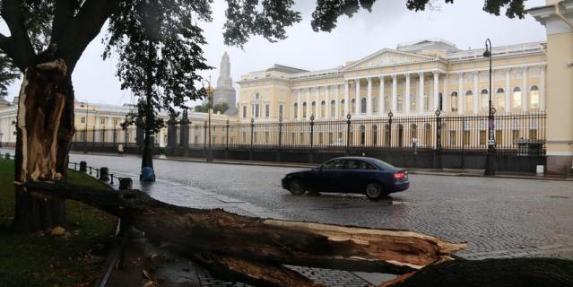 Сильный порыв ветра свалил почти вековой клен в Михайловском сквере прямо напротив Русского музея.