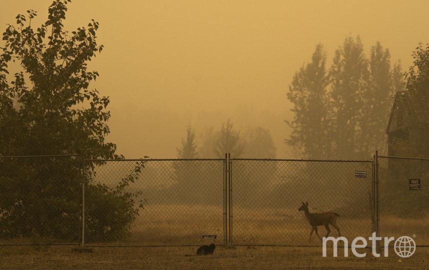 Из-за пожаров небо в Орегоне окрасилось в оранжевый цвет. Фото AFP