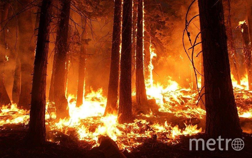 Лесные пожары часто беспокоят жителей России. Фото – архив. Фото pixabay