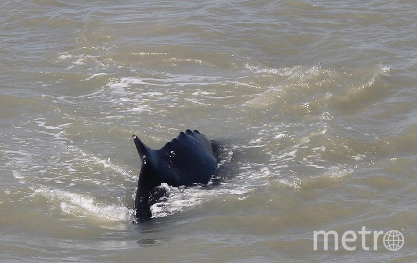 Кит заблудился во время ежегодной миграции и оказался в водах реки Ист-Аллигейтор. Фото AFP