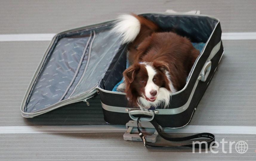 Ограничения по весу остаются прежними: масса контейнера вместе с животным не должна превышать 8 кг. Фото Getty