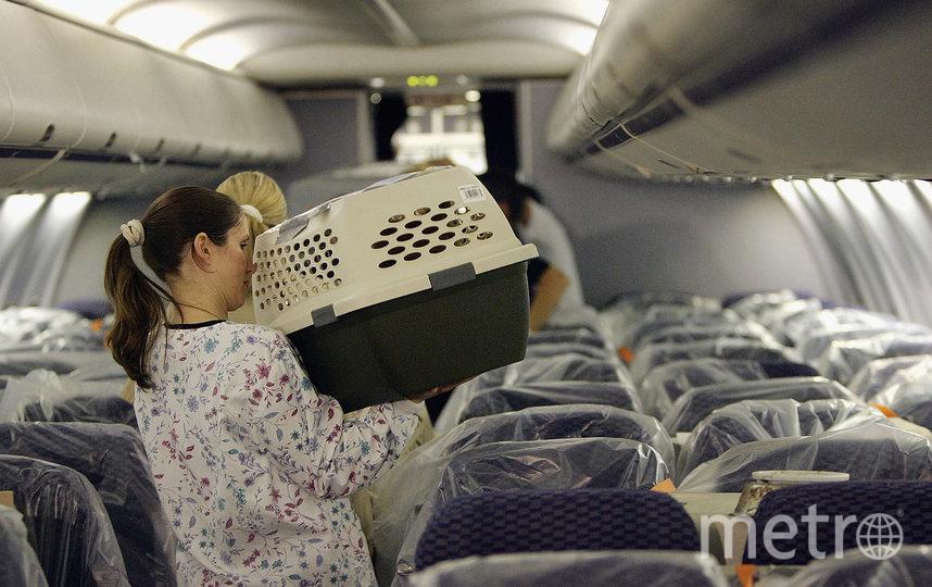 """Теперь при перевозке действует правило """"один пассажир – один питомец"""". Фото Getty"""