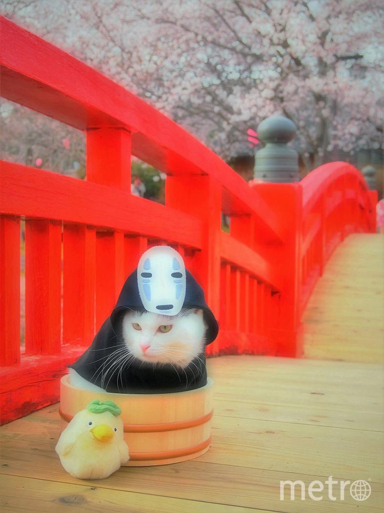 В основном Yagyou превращает своих питомцев в героев аниме. Фото YagyouNEKO | Twitter