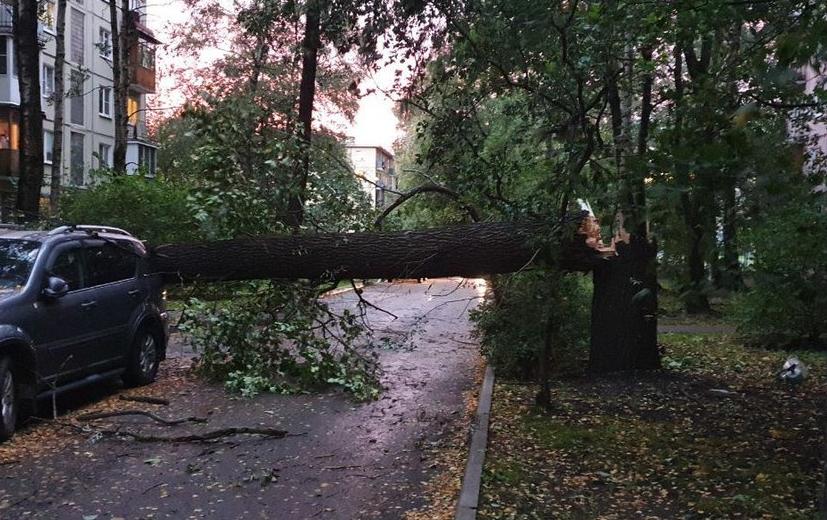 В Петербурге ожидается сильный ветер. Фото ДТП/ЧП, vk.com.