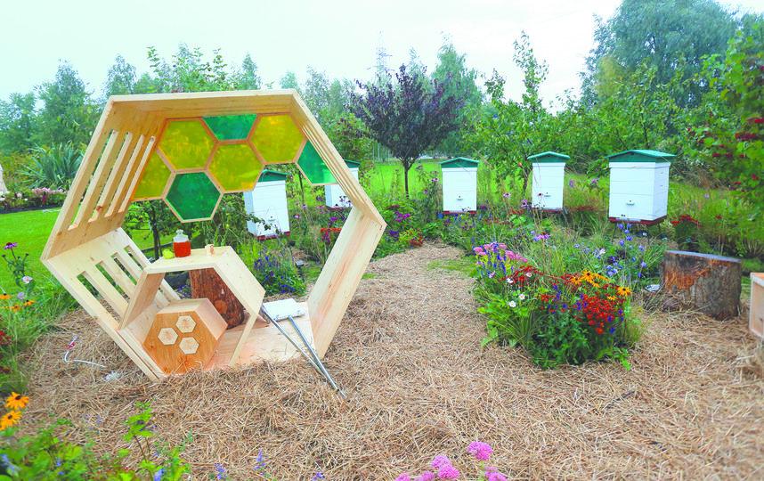 В саду «Старая пасека нового времени» можно будет увидеть одно из излюбленных мест Льва Толстого. Фото Василий Кузьмичёнок