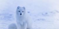 Синоптик рассказал, какой зимы ждать в этом году