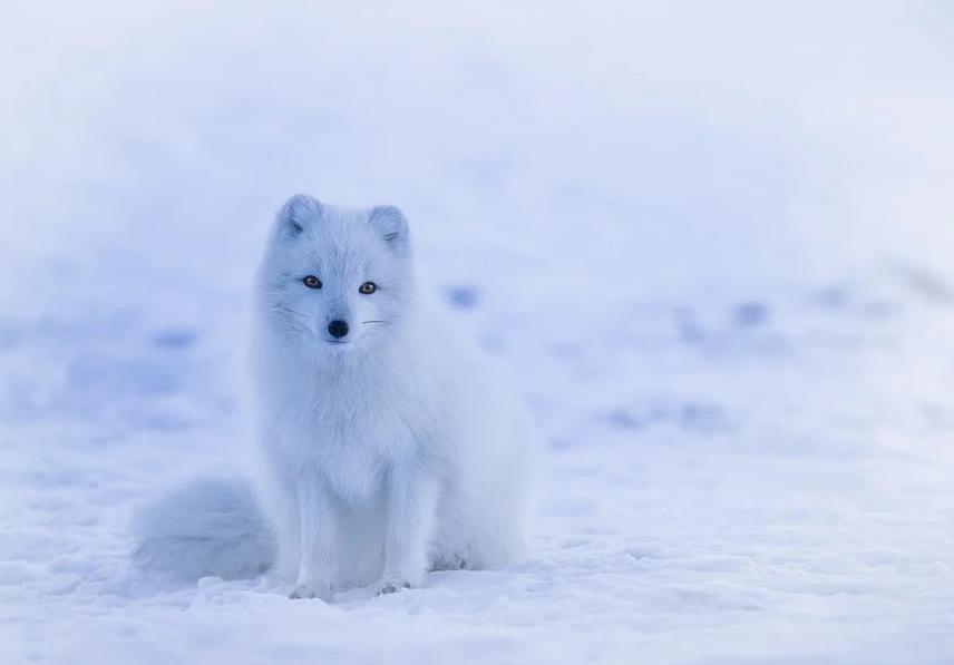 Самым теплым зимним месяцем станет февраль. Фото Pixabay.