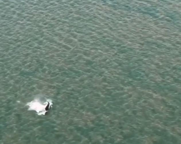 В понедельник 21 сентября кита видели в заливе Ван-Димен. Фото instagram @parksaustralia