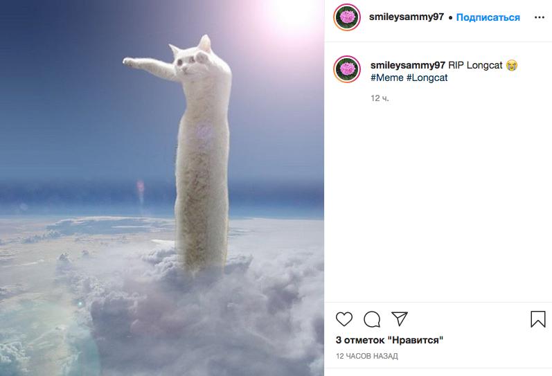 Умер легендарный кот-мем. Фото instagram.com/smileysammy97/.