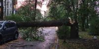 Жителей Петербурга предупредили о сильном ветре