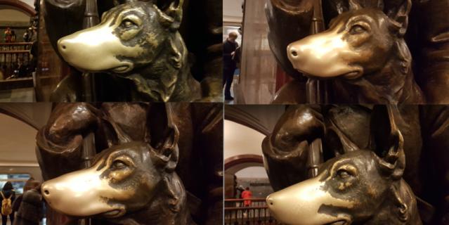 У всех четырёх собак на станции ярко блестят носы.