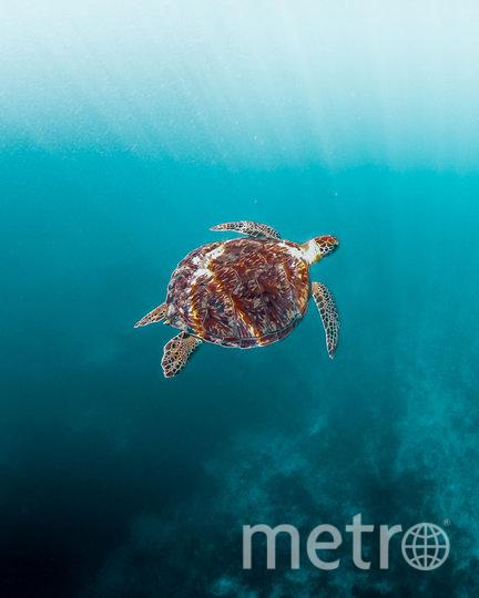 Спокойный подводный мир. Фото предоставлено AGORA