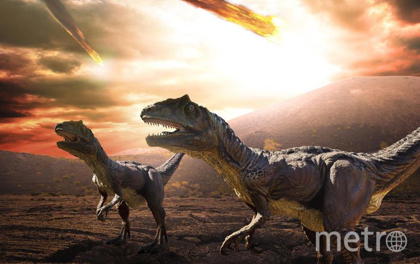 Динозавры получили свой «шанс» на размножение благодаря экологической катастрофе. Фото iStock