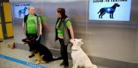 В аэропорту Хельсинки пассажиров на коронавирус проверяют собаки