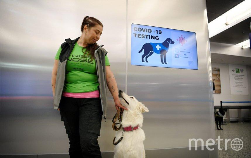 Собака способена обнаружить больного коронавирусом за 10 секунд, а весь процесс занимает меньше минуты. Фото AFP