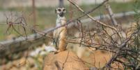 Жители столичного зоопарка переходят на зимний режим