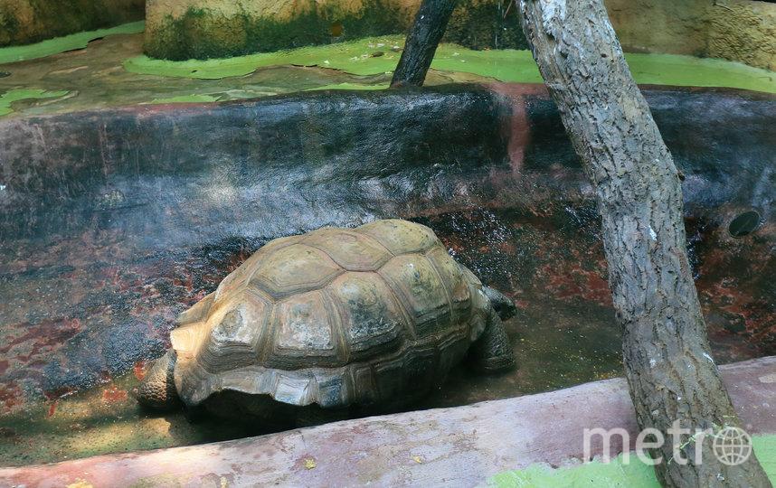 Гигантские черепахи (сейшельские, галапагосские, шпороносные)  уже перебрались в тепло. Фото Василий Кузьмичёнок