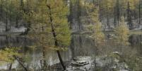 Названа причина массовой гибели лесов под Норильском