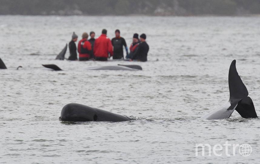 """По данным """"Франс-Пресс"""", число погибших дельфинов достигает 380. Фото AFP"""