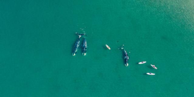 Кирилл сфотографировал гренландских китов.