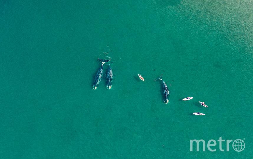Кирилл сфотографировал гренландских китов. Фото Кирилл Умрихин