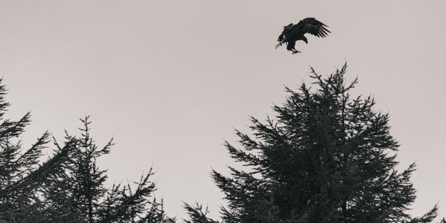 В том числе сфотографировал краснокнижного белоплечего орлана.