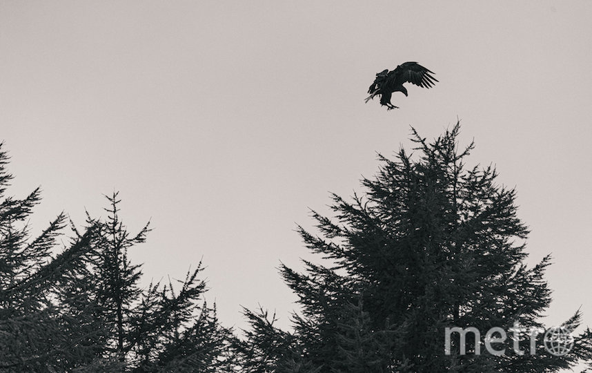 В том числе сфотографировал краснокнижного белоплечего орлана. Фото Кирилл Умрихин