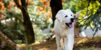 В Петербурге оштрафовали недобросовестных владельцев собак
