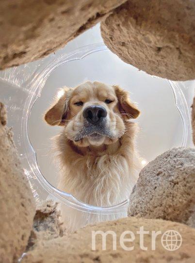Фотография финалиста конкурса. Фото Candice Sedighan / Comedy Pet Photo Awards 2020