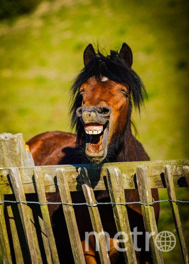 """""""Сумасшедшая лошадь"""". Фото Daniel Szumilas / Comedy Pet Photo Awards 2020"""