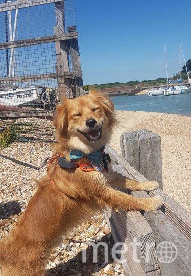 """""""Очень счастливый пёс"""". Фото Dean Pollard / Comedy Pet Photo Awards 2020"""