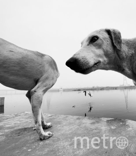 """""""Оооох"""". Фото Dimpy Bhalotia / Comedy Pet Photo Awards 2020"""