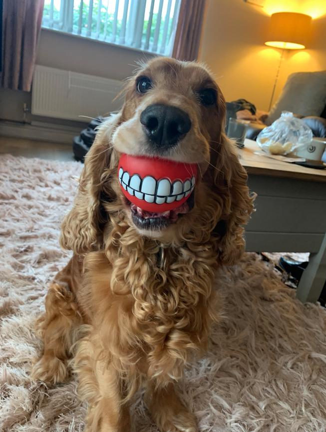 """Новые зубы"". Фото Lianne Richards / Comedy Pet Photo Awards 2020"