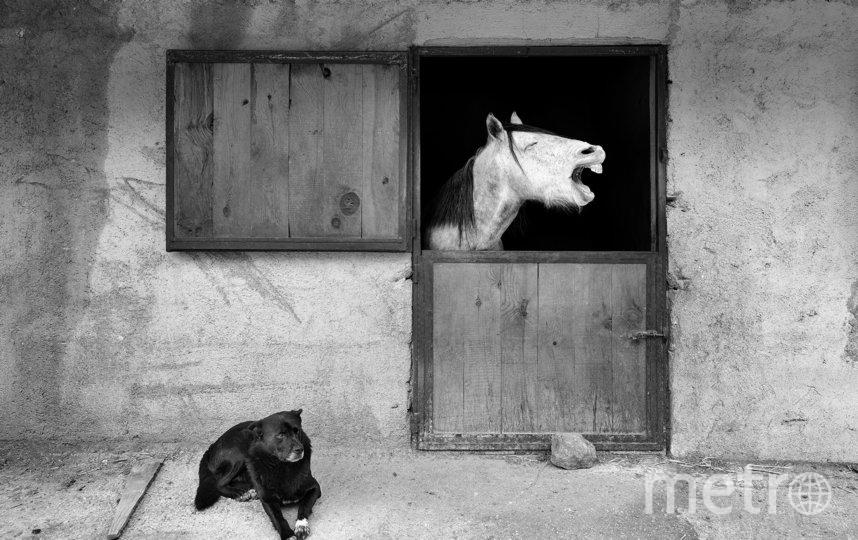 """""""Улыбка"""". Фото Mehmet Aslan / Comedy Pet Photo Awards 2020"""