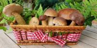 Идём в лес за грибами, учимся играть в шахматы и привыкаем качать пресс: список дел на октябрь
