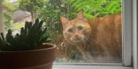 Catspotting – фотоохота на чужих котов - новый тренд в соцсетях