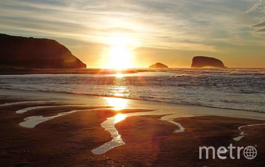 """Тысячи морских животных выбрасываются на берег. Фото pixabay.com, """"Metro"""""""