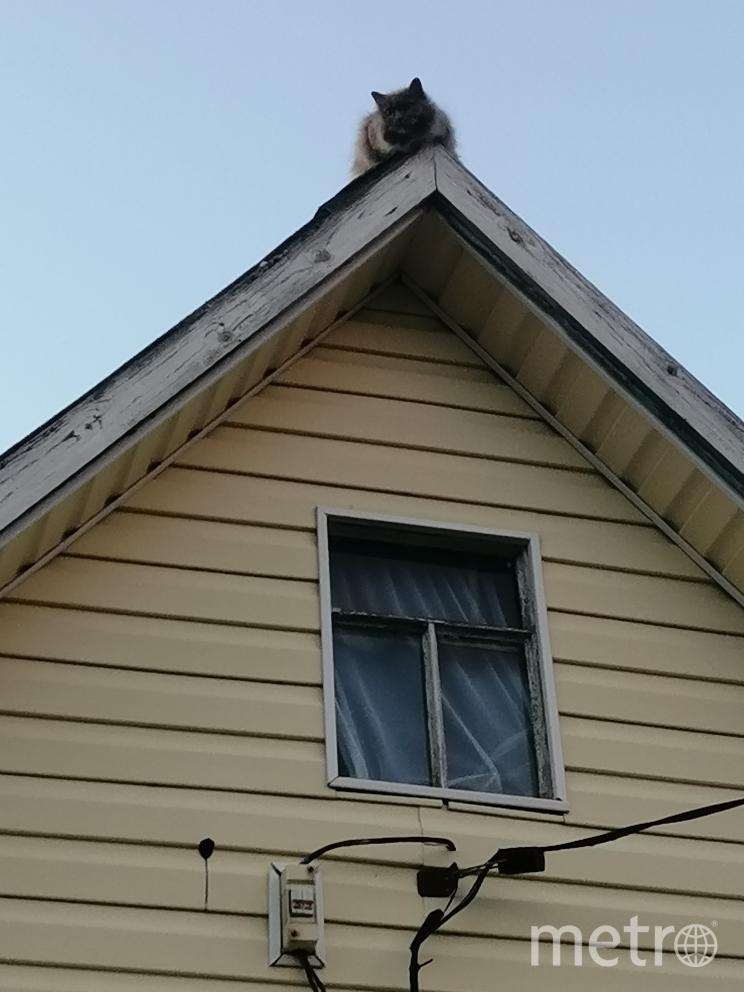 """Высоко сижу - далеко гляжу! Кот на коньке садового домика. Фото Маслова Юлия, """"Metro"""""""