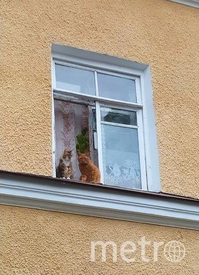 """Коты. Фото Светлана Калинина, """"Metro"""""""