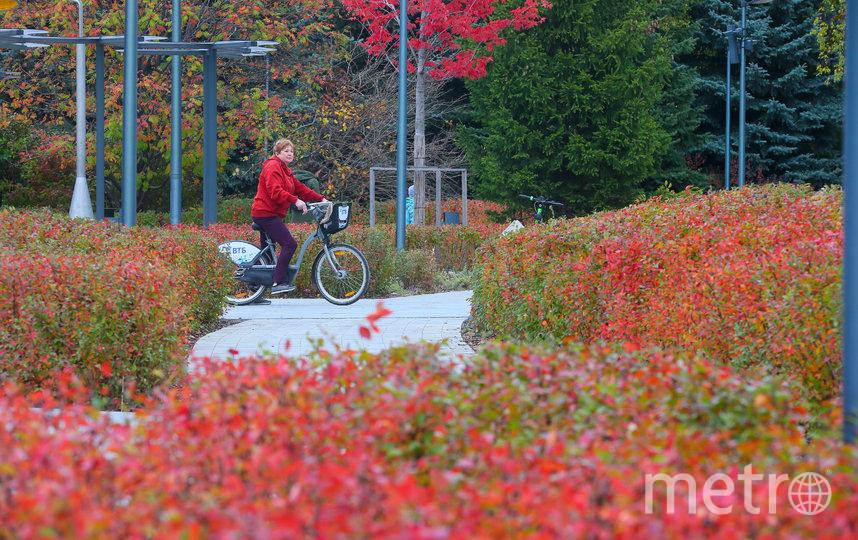 Главный осенний цвет Парка Горького – красный. Фото Василий Кузьмичёнок