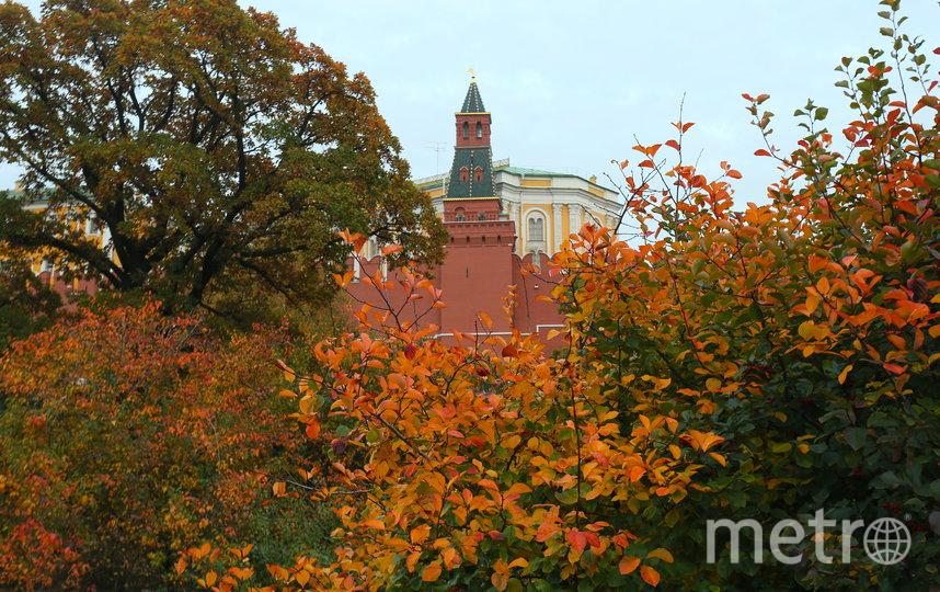 В Александровском саду можно посидеть на лавочках в окружении в прямом смысле золотой осени. Фото Василий Кузьмичёнок