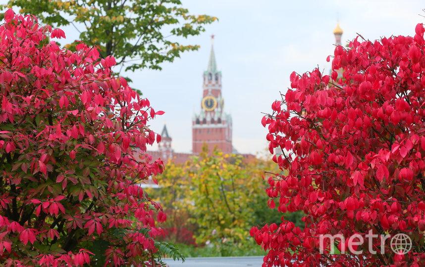 """В самом центральном парке Москвы """"Зарядье"""" можно сделать красивые фотографии на фоне башен Кремля. Фото Василий Кузьмичёнок"""
