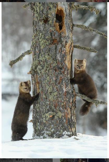 20 лет Сергей Горшков профессионально занимается съёмками живой природы. Фото предоставлены героем публикации instagram.com/sergey_gorshkov_photographer/