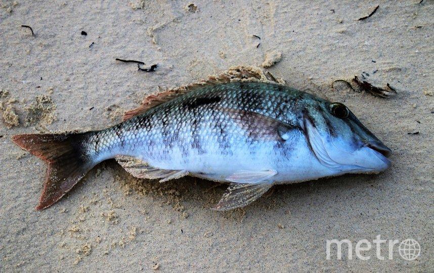 """Ранее местные жители сообщили о гибели рыбы. Фото pixabay.com, """"Metro"""""""
