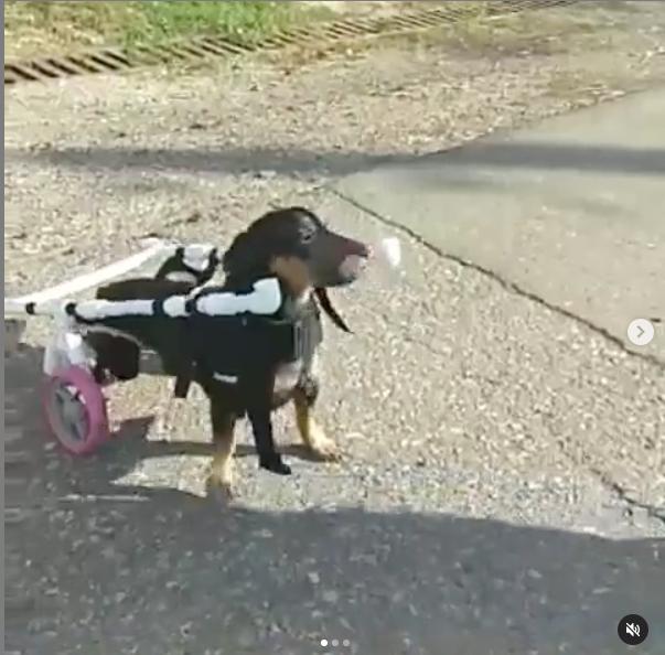 Зевс учится ходить заново. Фото Instagram.com/usk.help